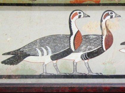 Una especie extinta de ganso, revelada en una antigua pintura egipcia