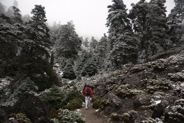 Carmen Crespo Aplaude La Aprobación Del Proyecto De Ley Para La Declaración Del Parque Nacional Sierra De Las Nieves (Consejería De Agricultura, Ganadería, Pesca Y Desarrollo Sostenible)