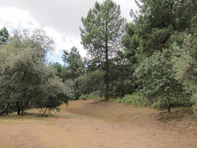 Archivo - Paraje del Parque Periurbano de Los Villares en una imagen de archivo