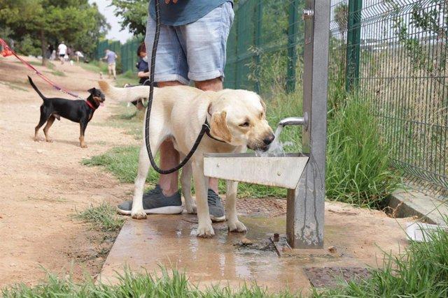 Un perro bebe agua en un espacio de esparcimiento canino
