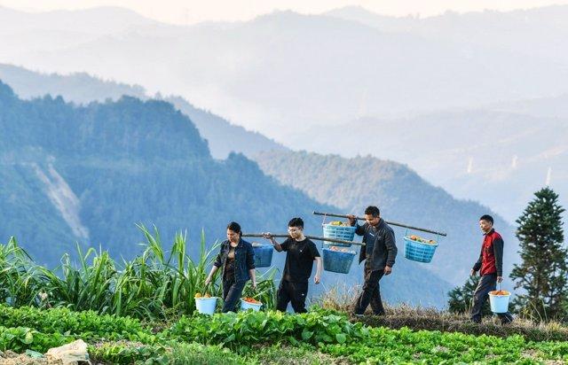 Archivo - Trabajadores agrarios en Guizhou