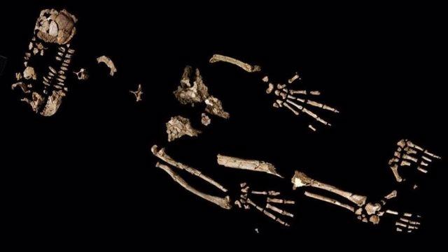 Fragmentos del equeleto de Ardi