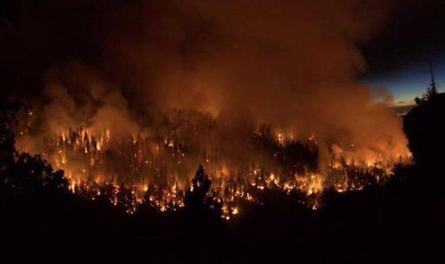 Fuego en el Parque Nacional Sequoia, California