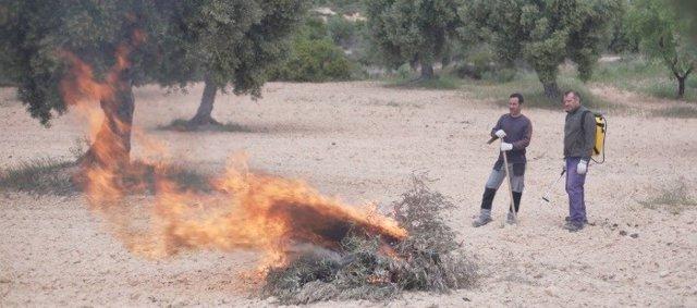 El Departamento de Agricultura del Gobierno de Aragón mantendrá el periodo de quemas controladas hasta el 31 de marzo.