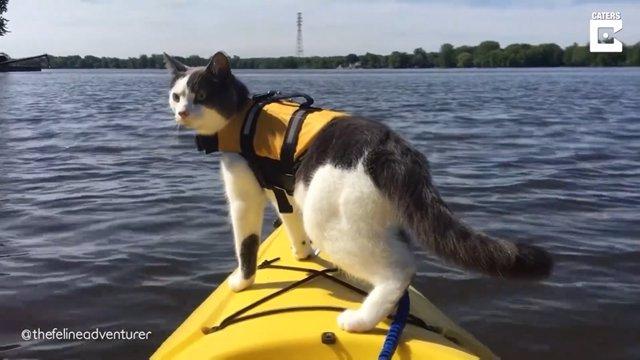 Conoce al Sr. Munchkin, el gato al que le encanta ir de aventuras al aire libre