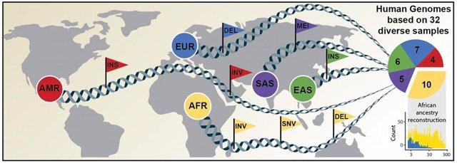 Investigadores secuencian 64 genomas humanos como nueva referencia de la diversidad genética mundial