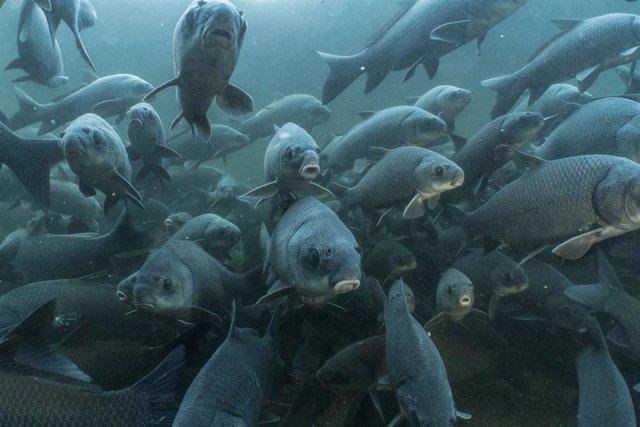 Un tercio de los peces de todo el mundo se enfrenta a la extinción.