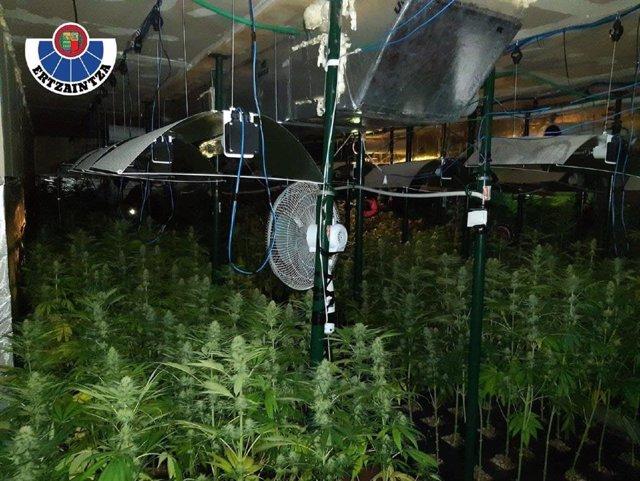 Plantación indoor de marihuana intervenida en Güeñes (Bizkaia)