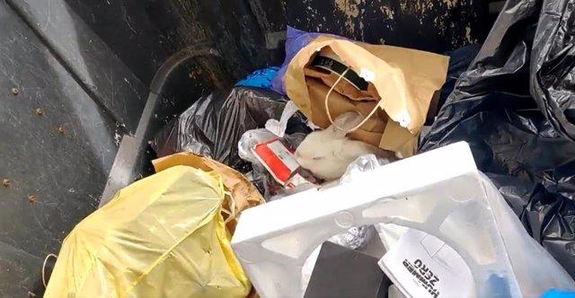 Una mujer encuentra un conejo que habían tirado a un contenedor de basura en Las Palmas de Gran Canaria