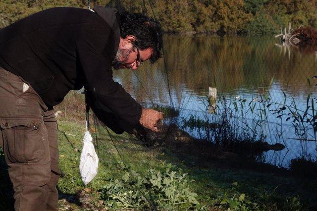 Labores de anillamiento de aves en la laguna de Fuente del Rey