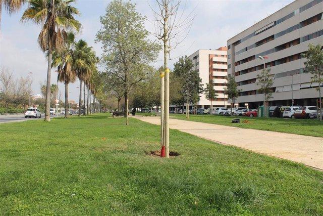 El Ayuntamiento prevé plantar medio centenar de árboles antes del verano.