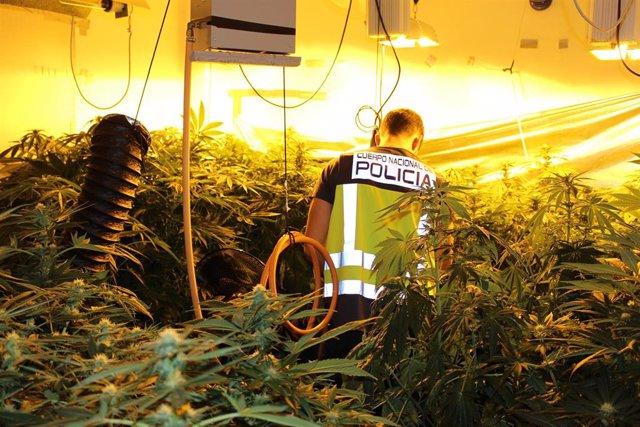 Nota De Prensa: La Policía Nacional Interviene Cerca De 2000 Kilogramos De Marihuana Y Detiene A 137 Personas,,