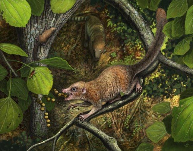 Poco después de la extinción de los dinosaurios, los primeros primates arcaicos conocidos, como la nueva especie Purgatorius mckeeveri que se muestra en primer plano, se diferenciaron rápidamente de su competencia.