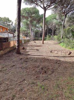 Np, Fotos Y Audio Daniel Sánchez Final 1 Fase Mejora Pinar Dunas De San Antón El Puerto