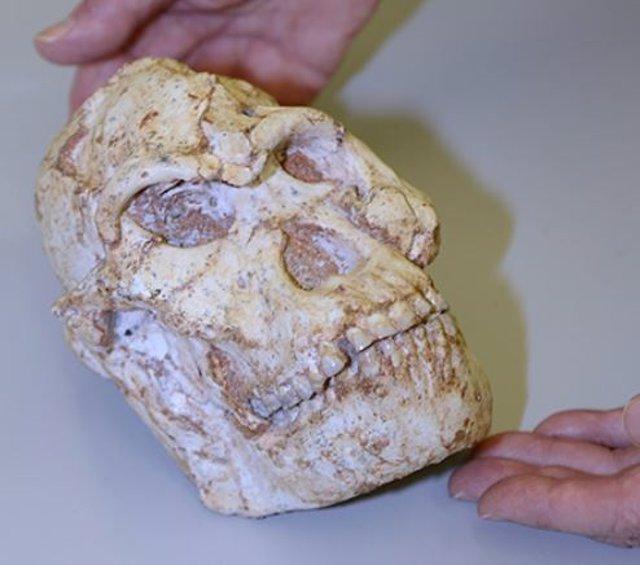 Cráneo de Little Foot