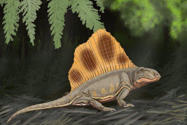 Dimetrodon loomisi