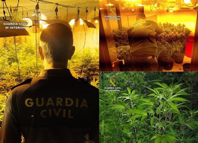 Plantación de marihuana hallada en el marco de la segunda fase de la Operación 'Espora'