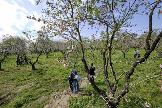 Varias personas visitan el parque de la Quinta de los Molinos y ver sus almendros en flor, en Madrid (España), a 28 de febrero de 2021. El pasado 20 de febrero el Ayuntamiento de Madrid reabrió parcialmente este parque después de verse afectado a consecue