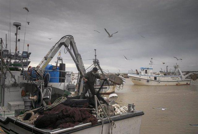 Archivo - Llegada de un barco pesquero a  la lonja de la Cofradía de Pescadores de Sanlúcar de Barrameda