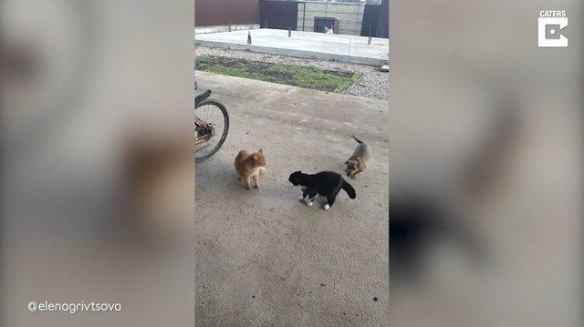 La sobreexcitada reacción de este perro al presenciar una discusión entre dos gatos se hace viral