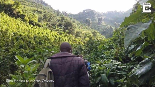 Este hombre se aventura en una excursión de cuatro horas por la selva para conocer a una familia de gorilas en Uganda