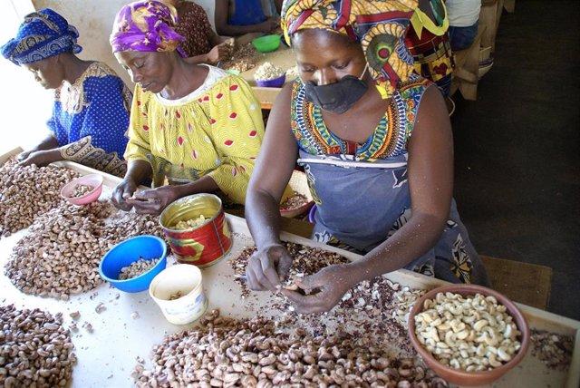 Mujeres africanas pelan anacardos.