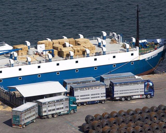 Archivo - Buque en el puerto de Cartagena