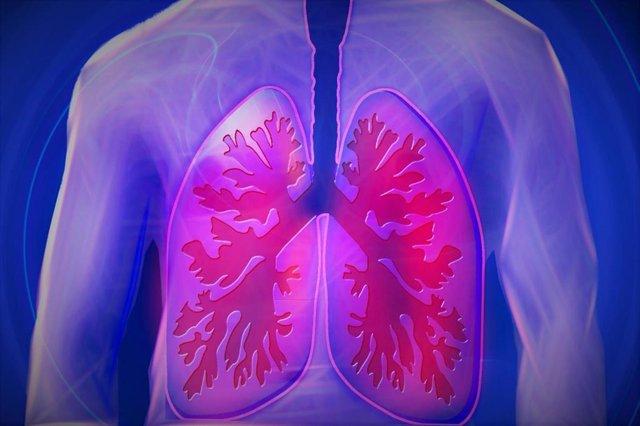 Archivo - Pulmones