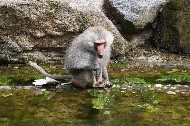 Mono en un zoológico