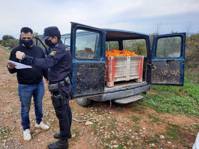 La Policía de la Generalitat detiene a 28 personas en 110 inspecciones durante la segunda campaña de prevención de robos y empleo ilegal en el campo