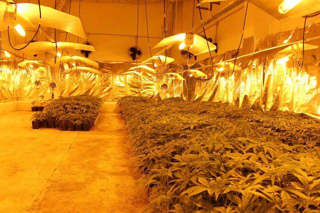 Notasd De Prensa: La Policía Nacional Interviene Cerca De 2000 Kilogramos De Marihuana Y Detiene A 137 Personas