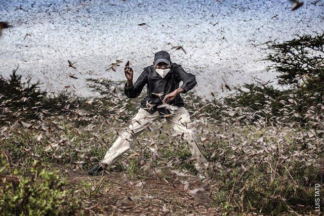 Archivo - Arxiu - Luis Tato, 'Fighting Locust Invasion in East Africa'