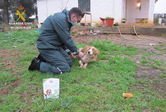 : La Guardia Civil Rescata A Cuatro Perros Abandonados Por Sus Dueños En Una Finca A Las Afueras De Masdenverge