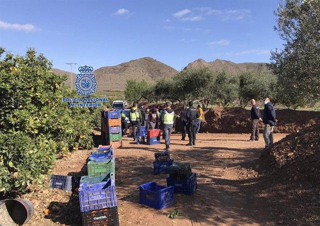 Operación contra la explotación laboral en el campo murciano