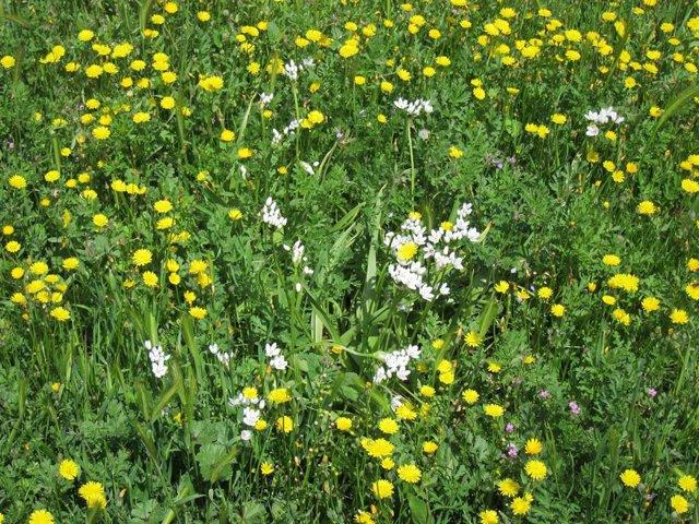 Archivo - Flores en un prado.