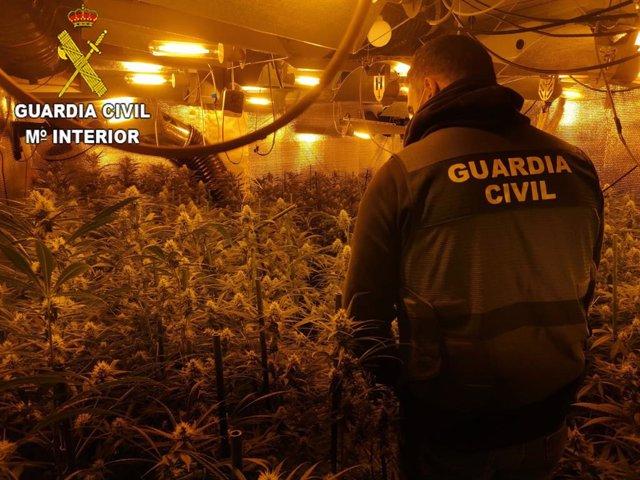 Plantacion de marihuana en una imagen de archivo