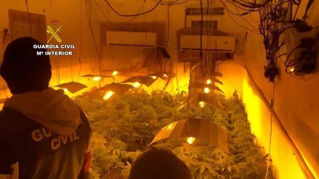 Plantación de marihuana desmantelada por la Guardia Civil