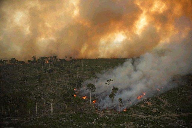 Archivo - Incendio forestal en el Amazonas