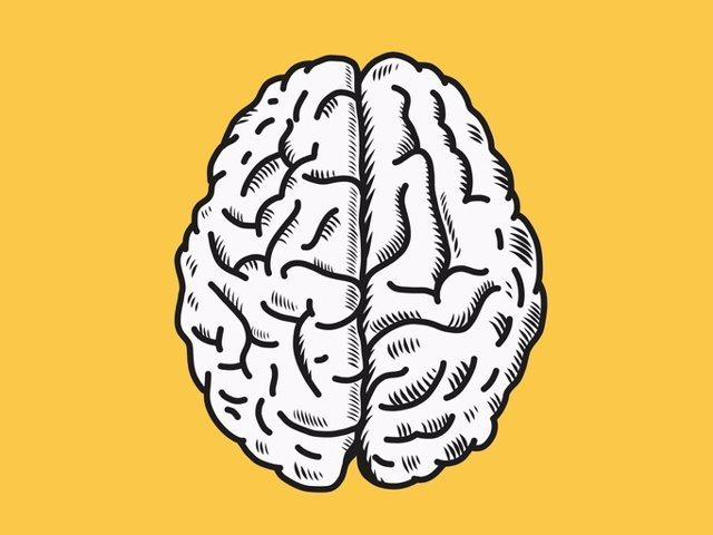 Archivo - Brain vector illustration in top view.