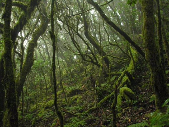 Archivo - Parque Nacional de Garajonay