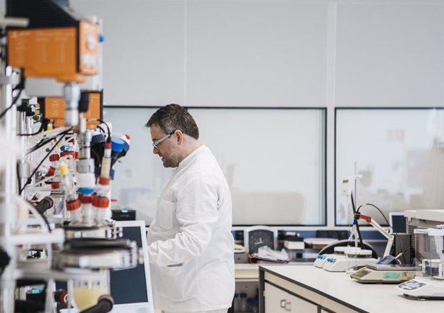 Desarrollo del modelo in vitro