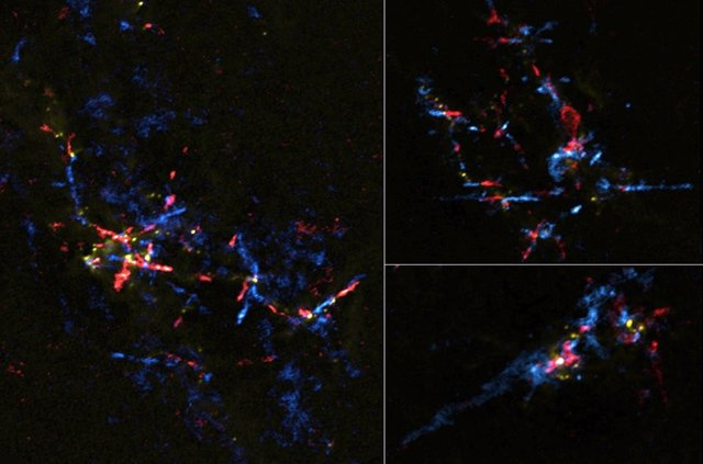 Imagen compuesta de pseudo-color de ALMA de las salidas de gas de los huevos estelares en la región del Centro Galáctico. El gas que se mueve hacia nosotros se muestra en azul y el gas que se aleja de nosotros se muestra en rojo.
