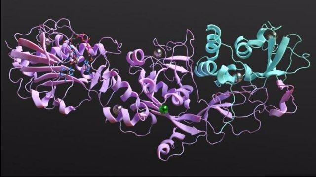 Interferir con la unión de nsp14 y con el complejo proteico nsp10-nsp14 es el objetivo de la investigación más reciente de ITQB NOVA en COVID-19