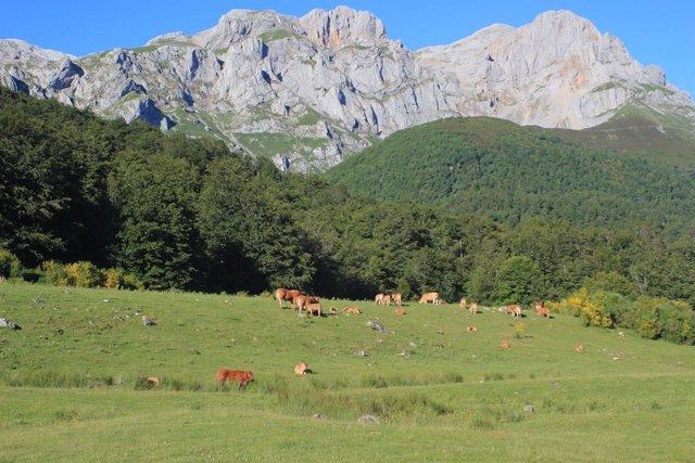 Paisaje. Montañas, praderas, animales.