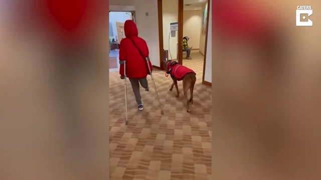 Conoce a Dexter, el perro crestado rodesiano que está cambiando la vida de un niño de 10 años al que le falta una pierna