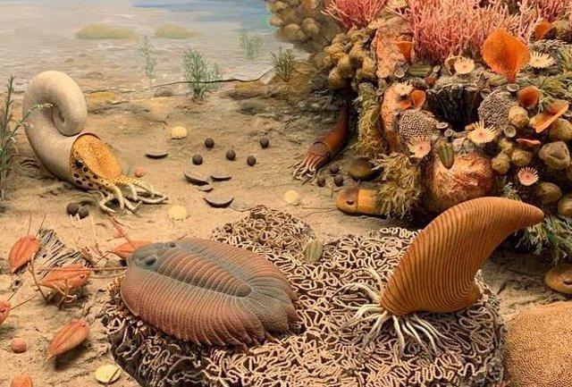 Los trilobites tenían órganos respiratorios en sus patas, en forma de bolsas colgando de sus muslos
