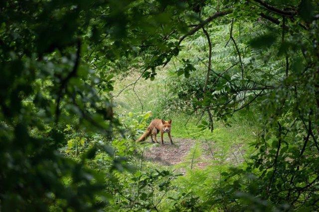 Los ecosistemas con una diversidad de mamíferos, incluidos los cuerpos más grandes y las criaturas de vida más larga como los zorros, son mejores para nuestra salud.