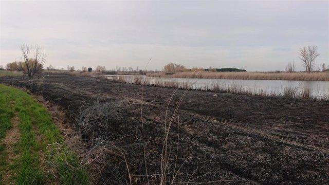 Imagen de las zonas quemadas en el Canal de Castilla a su paso por Palencia.