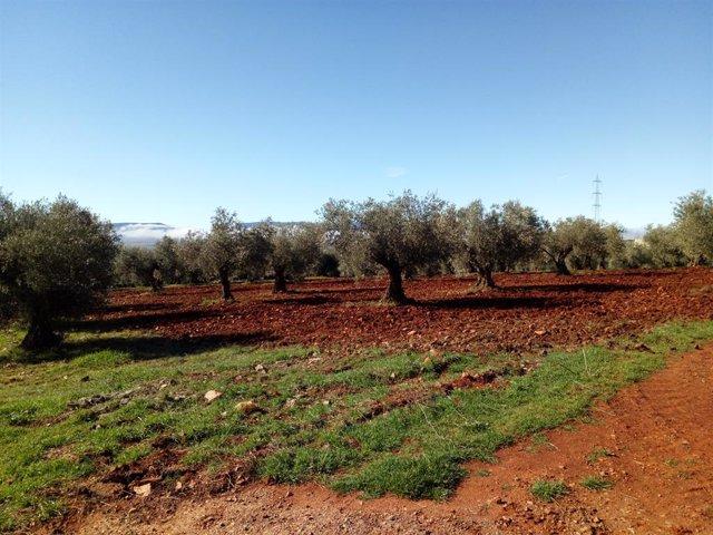 Archivo - Agricultura ecológica en Toledo