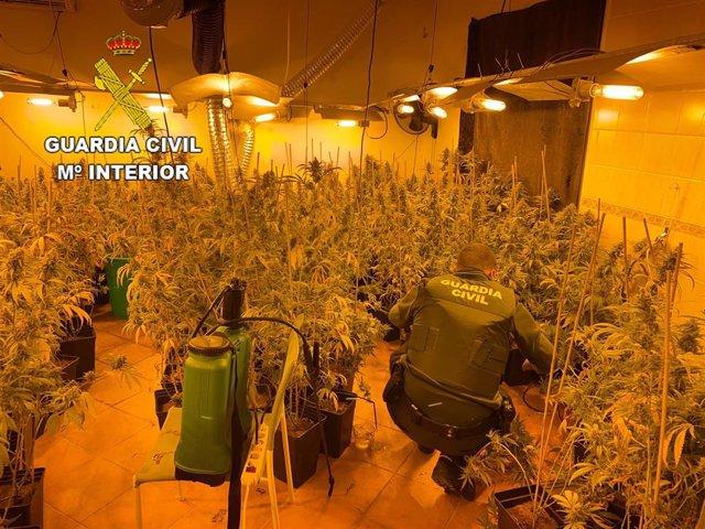 Plantación de marihuana encontrada por la Guardia Civil en Talavera